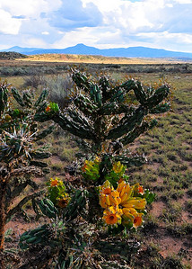 FSR 151, northern New Mexico