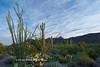 Saguaro N.P. 2016-19