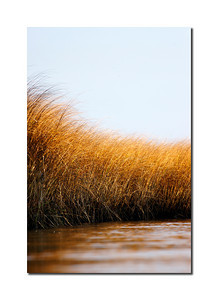 Autumn Marsh, Madaket, Nantucket