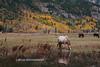 Wyoming Fall 2015-2