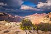 Grand Canyon 2016-1