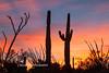 Saguaro N.P. 2016-14