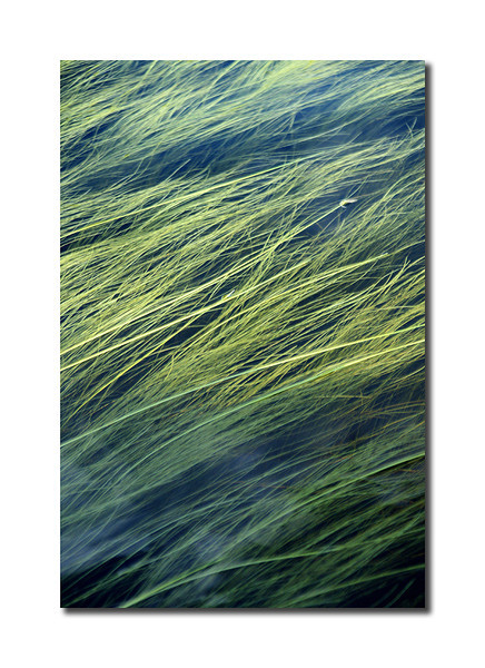 River Grass, St. Croix River, Maine