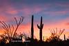 Saguaro N.P. 2016-13