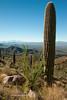 Saguaro N.P. 2016-10