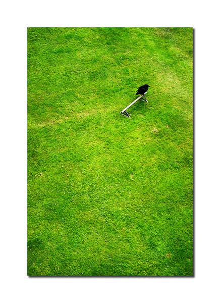 Raven, London, England