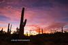 Saguaro N.P. 2016-11