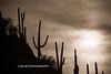 Saguaro N.P. 2016-25