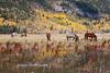 Wyoming Fall 2015-1