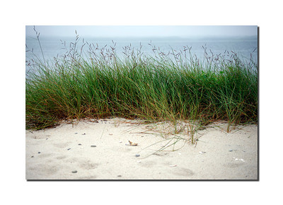 Coatue Beach Grass, Nantucket