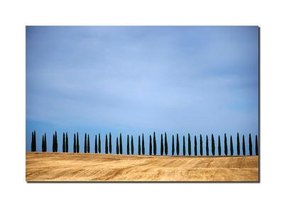 Cypress Trees I, Pienza, Italy