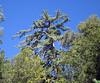 Deer Creek Trail, San Jacinto Mountains, 30 Oct 2011