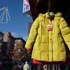 yellowcoat