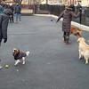houstonstdogparksmug