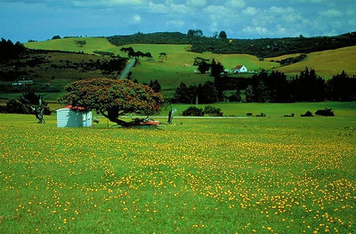 A typical New Zealand landscape with grazing fields for cows and/or sheep.