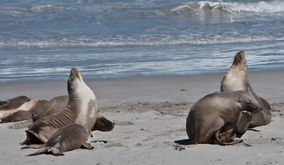 Seal Beach Tasmania, AU