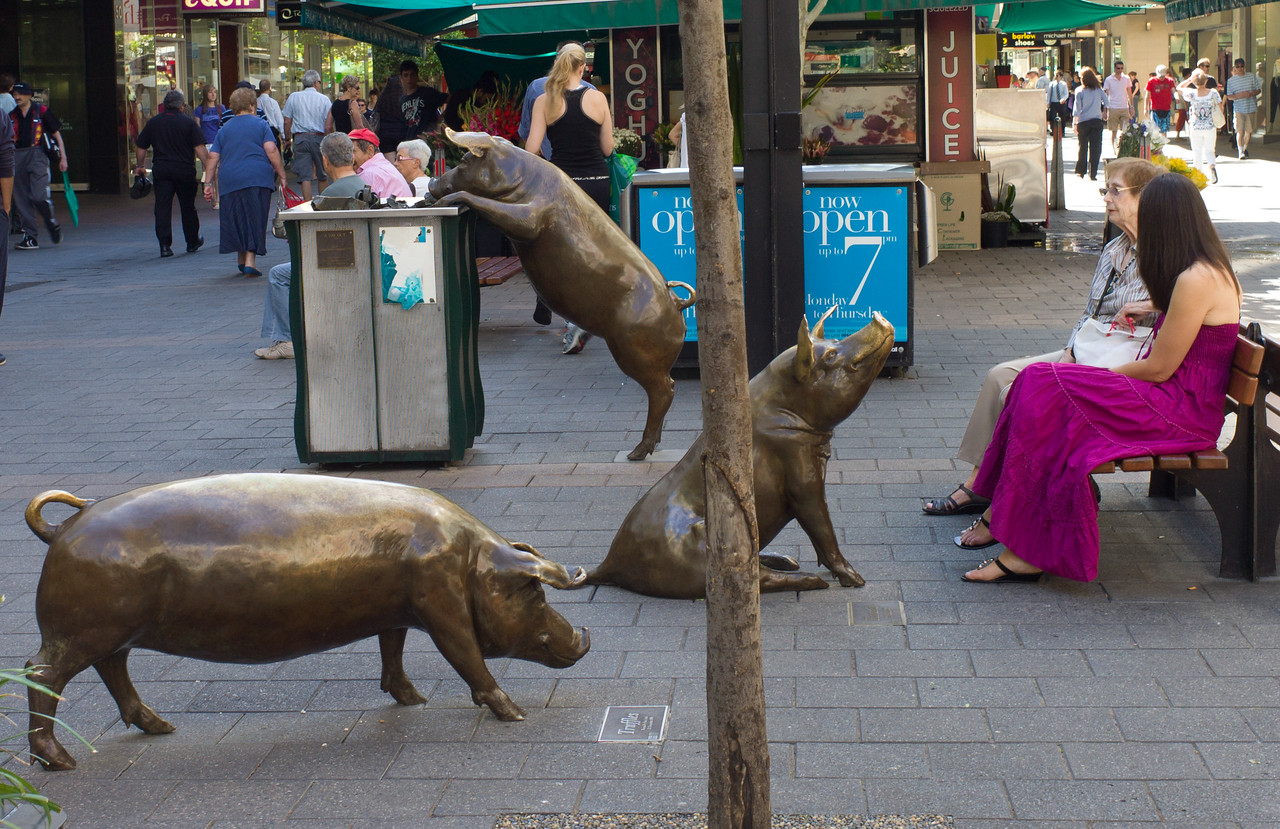 Adelaide mall.  Amazing pigs