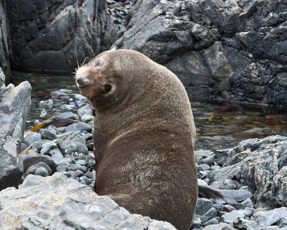 Seal Beach Wellington