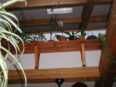 140 Orchid Shelf_495_371_90