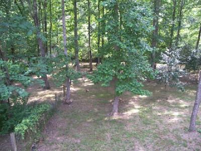 150 Fenced Yard to Creek_495_371_90