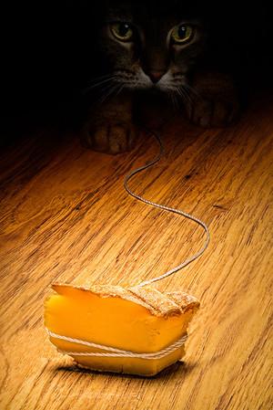 mousetrap_20130202