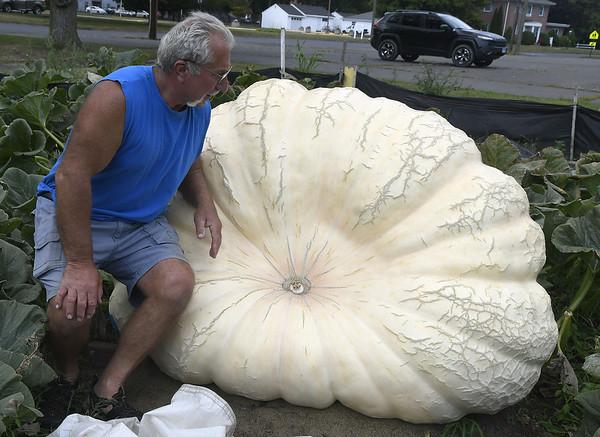 GiganticPumpkins-PL-090617_6855