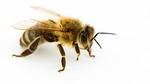 city-oks-backyard-beekeeping