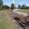 04/11/18  Wesley Bunnell | Staff<br /> <br /> The Rose Garden in Walnut Hill Park on Wednesday afternoon which just underwent a recent clean up.