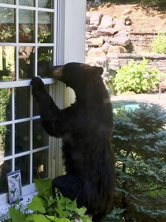 bear-092718