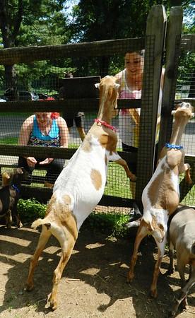 GoatHike-SO-080618 011