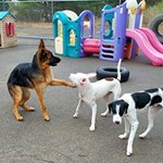 the-woof-pack-doggy-daycare-still-caring-for-essential-workers-pets