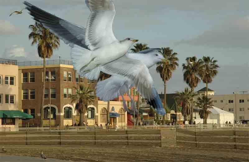 North Beach Panorama with Gulls #2