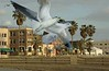 North Beach Panorama with Gulls #2