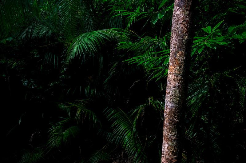 Ferns and Palms, Daintree Rainforest