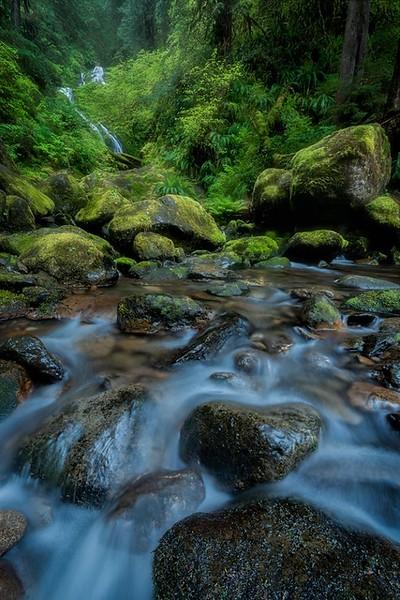 Bunch Falls, Quinault Rainforest