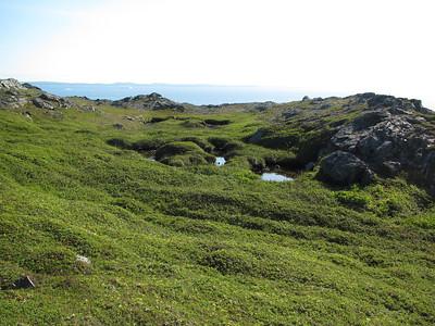 Newfoundland Aug 01