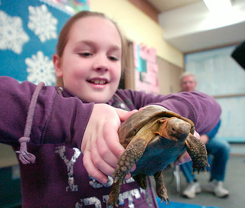Nine year old Annabelle Morrison of Burnt Hills holds a Russian tortoise during the PTSA Science Saturday at Joseph Henry Elementary School in Galway. A selection of reptiles and amphibians was brought to the fair by wildlife rehabilatator Dee Strnisa of Duanesburg. ed Burke 1/29/11