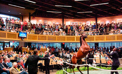 The yearling sales kicked off Monday evening at Fasig-Tipton shown is a Bay Colt, brother of GhostZapper the 2004 Horse of the Year. Photo Erica Miller 8/2/10 news_HorseSale1_Tues