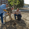 CSC participates in ReTree Nebraska by planting a shade tree Thursday, Sept. 24 by the new parking lot of the old Administration building.