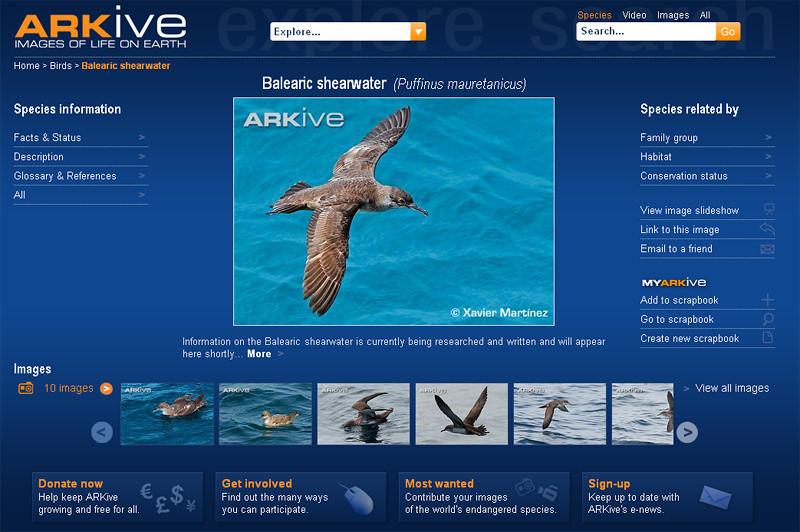 """<span style=""""color:#CDC9C9""""><strong>04 Marzo 2010 · 4th March 2010<br> ARKive ha publicado algunas de mis imágenes de Pardela Balear (Puffinus mauretanicus) y estoy encantado de colaborar con ellos! Podéis ver una captura de pantalla más abajo o visitar la web en  http://www.arkive.org/balearic-shearwater/puffinus-mauretanicus/</span></center></font></strong><br>  <span style=""""color:#EED5B7"""">ARKive has published some of my Balearic Shearwater (Puffinus mauretanicus) images and I'm pleased to collaborate with them! You can see a screenshot below or visit the web http://www.arkive.org/balearic-shearwater/puffinus-mauretanicus/</span></center>"""