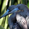 New Bird Pics Uploaded