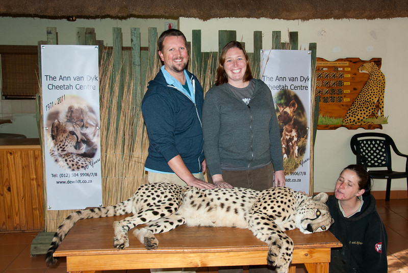 """<span id=""""title"""">Petting a Cheetah</span> <em>Ann van Dyk Cheetah Centre</em> Not only did we get to see three separate cheetahs run at full speed, then we got to pet one! This is one of their 'ambassador' cheetahs that they take to schools and events to promote awareness. The handler coaxed the cheetah onto the table with food, and then it just laid down and started purring - LOUDLY. I guess it really likes being petted. We were instructed only to pet between the shoulder and hip bone. Not scratching the ears or rubbing the belly allowed - not because the cheetah wouldn't enjoy it, but because if he twitched he could tear a giant gash in you."""