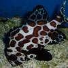 Aquarium fish at the Oceanic Museum