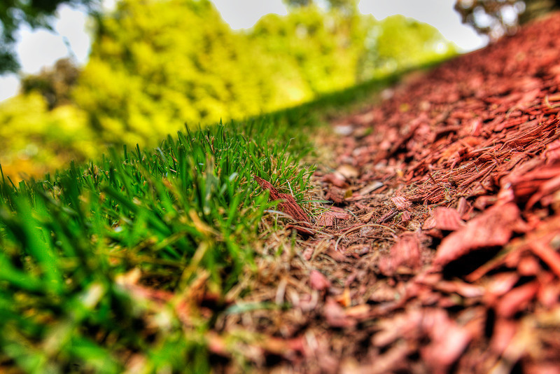 117/365 - May 1, 2012 - Small Critter's POV <br /> <br /> My creative slump is continuing.  I captured this shot as I walked out of the office.  This shot is along the grass/mulch border on one of the landscaping beds on the side of the office.  I was going for a different POV and a shallow DOF.  I tried to highlight the various light/contrast levels between the green grass, red mulch and bright background.