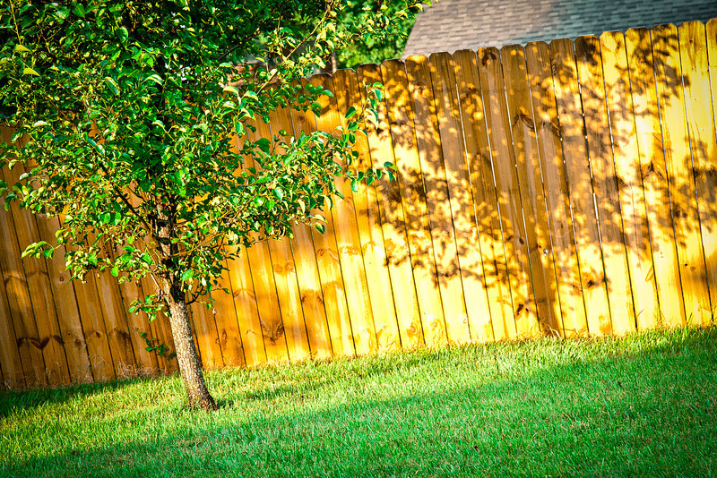 152/365 - June 5, 2012 - Morning Light and Shadow <br /> <br /> Prior to heading out to Clinton to make a job site visit, I noticed a portion of the morning sun casting a shadow on the fence from one of my pear trees.  It was good timing, as the rest of the fence was in the shade due to other trees and the house.