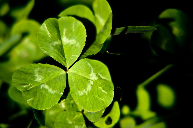 72/365 - March 17, 2012 - St. Patty's Day <br /> <br /> Today's shot is a simple one of clover in the backyard.  The picture pretty much summed up the day, a quiet one at the house with the kids.