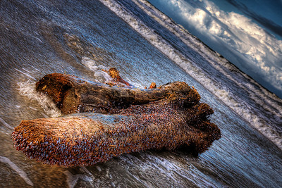 252/365 - September 13, 2012 - Driftwood   This morning upon arriving at the beach, I couldn't help but notice a rather large piece of driftwood floated ashore.  As evening approached with the sun setting over the dunes, I used the light to my advantage to capture this shot of the piece of driftwood as the tide rolled in.