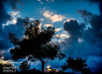 Carmel_40_Road