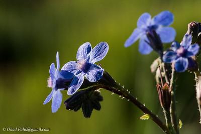 Pura in Spring