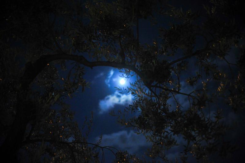 Nightlights 25